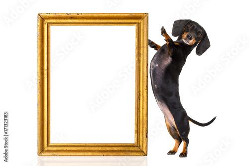 Fotobehang Franse bulldog dog with golden frame