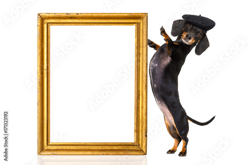 Fotobehang Crazy dog french sausage dog