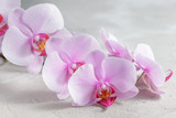 Pink orchid flower over grey concrete background