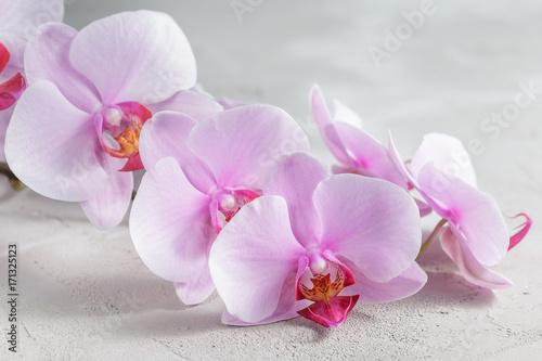 Fototapeta Pink orchid flower over grey concrete background
