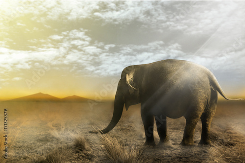 Fotobehang Thailand Single elephant walking in a field with the Sun from behind