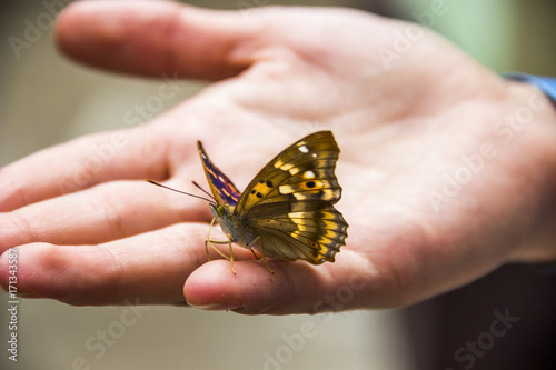 Fotobehang Vlinder butterfly on hand