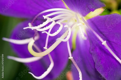 Aluminium Iris Purple Flower