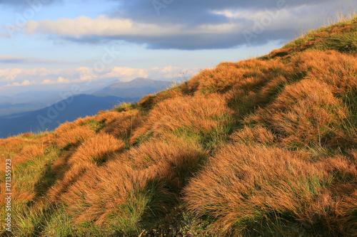 Foto op Plexiglas Gras dry grass on meadow in mountains