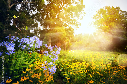 art beautiful landscape; sunset in the park - 171360398