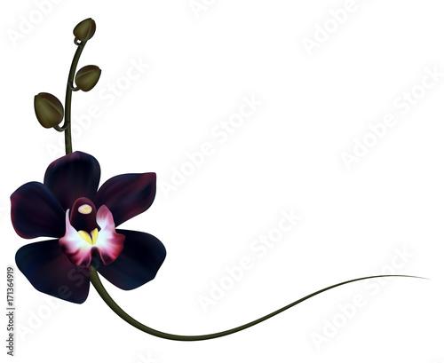 Realistic black orchid frame, corner. - 171364919