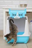 chaton tigré tabby dans litière dans intérieur maison - 171365181