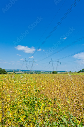 Foto op Plexiglas Canada Field of soybeans