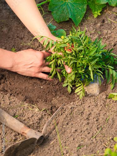 Fridge magnet woman gardener replanting flowers