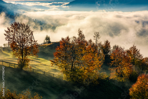 orchard with reddish foliage behind the fence on hillside in autumn mountains. gorgeous countryside with rising fog in valley - 171396342