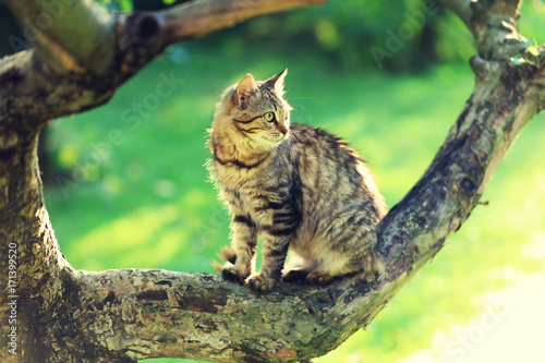 Cute cat sits on a branch of a tree in a garden Poster