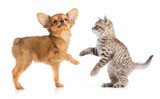 puppy and young cat standing isolated on white - 171400908