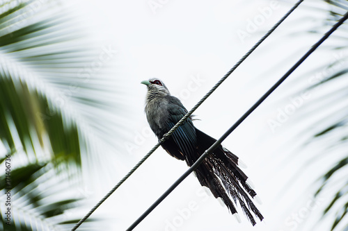 Birds perched on power lines Poster