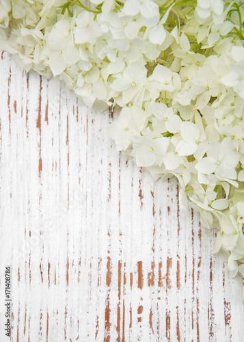 Fotobehang Hydrangea white hydrangea