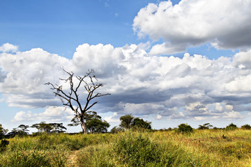 Clouds Over The Savanna