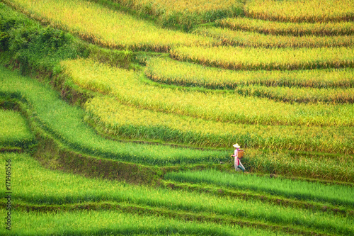 Foto op Aluminium Rijstvelden Vietnamist farmer walking in colouful rice terrace