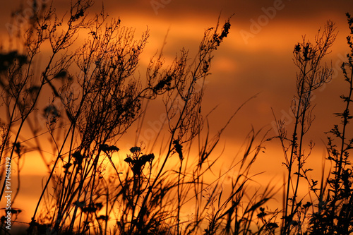 Aluminium Oranje eclat Dry, black plants against an orange sunset sky background