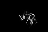 Beautiful dinosaur skeleton, black and white