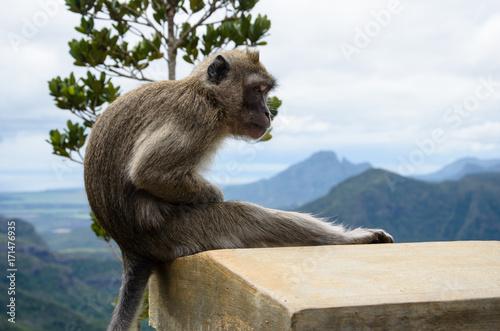 Aluminium Aap monkey