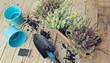 Planting autumn flowers in pots, heather in garden, gardening in autumn season, flat lay garden concept, toned