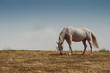 Cavallo al pascolo in montagna