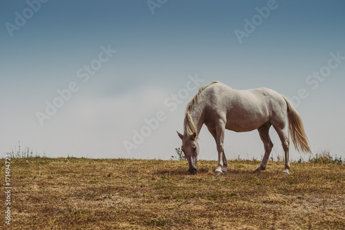 Foto op Plexiglas Gras Cavallo al pascolo in montagna