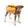 Funny Dog Wearing Hotdog Costume