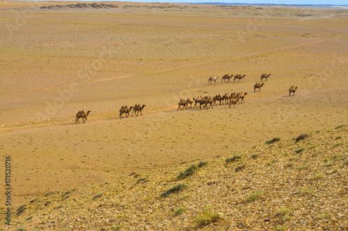 Fotobehang Kameel Double Hump Bactrian Camels Gobi Desert High Angle