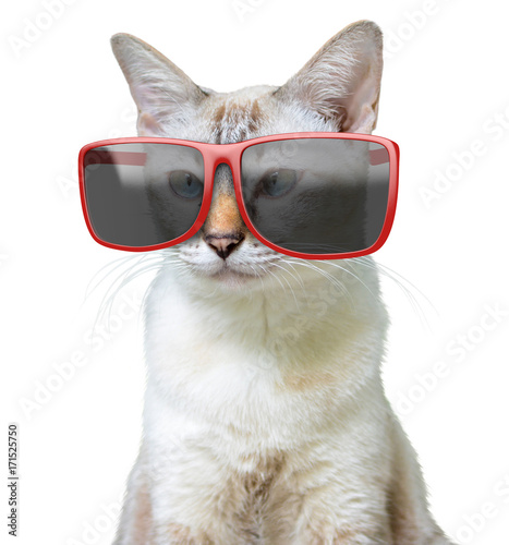 Funny animal portrait of a cool cat wearing big oversized red sunglasses, isolat Poster