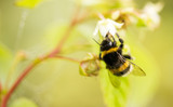 a bee on a flower in raspberries