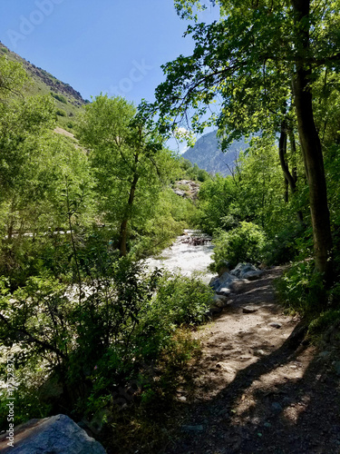 Papiers peints Rivière de la forêt Milcreek Canyon Utah