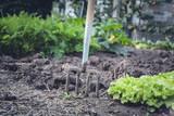 fresh bio garden salad - 171538784
