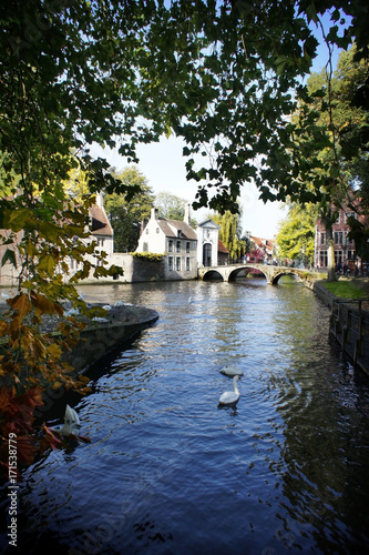 Fotobehang Brugge Lake of love, Brugge. swans on lake framed by the autumn leaves of maple