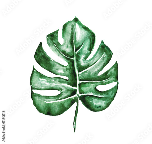 Watercolor tropical leaf isolated on white - 171542718