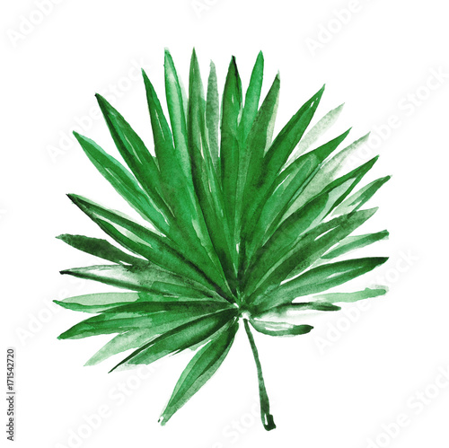 Watercolor tropical leaf isolated on white - 171542720