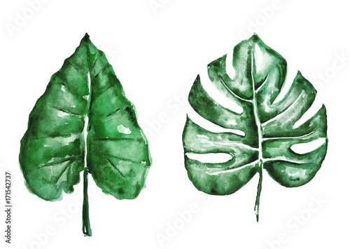 Watercolor tropical leaves isolated on white - 171542737