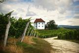 House among the vineyards in summer. Slovenske Konjice, Slovenia - 171561722