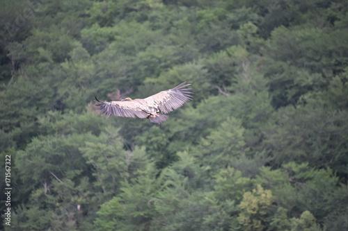 Tuinposter Khaki aquile in volo nei cieli di montagna