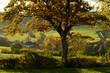 Het zuid-limburgse Mergelland in de buurt van Epen tijdens de herfst
