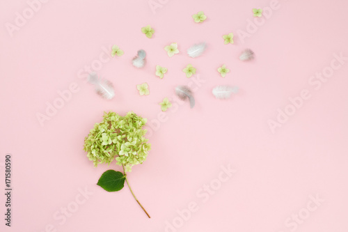 Fotobehang Hydrangea A branch of Hydrangea flower and feathers on a pink background