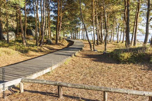 Fotobehang Weg in bos Boardwalk along the forest