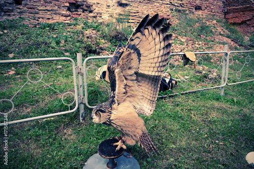 Fotobehang Khaki wings flapping owls