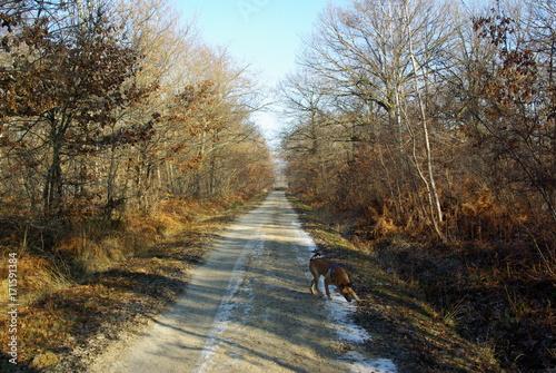 Papiers peints Route dans la forêt chemin froid