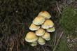 Mushrooms under the tree