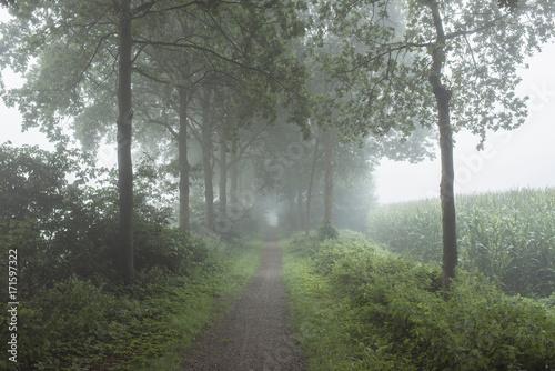 Fotobehang Weg in bos Rural pathway with trees in the mist.