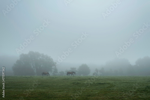 Aluminium Donkergrijs Misty countryside landscape with horses in meadow.