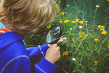 Little boy examining flowers using magnifying glass - 171603567
