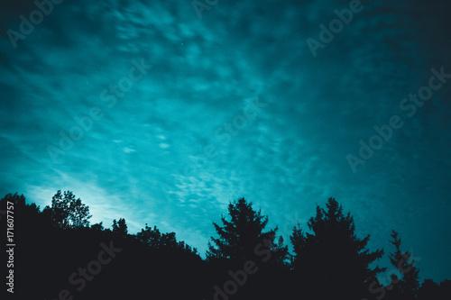 Blue dark night sky with many stars above field of trees © Jeka84