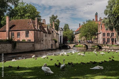 Spoed canvasdoek 2cm dik Brugge Swan Garden in Bruges, Belgium