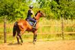 Jockey girl doing horse riding on countryside meadow - 171613900